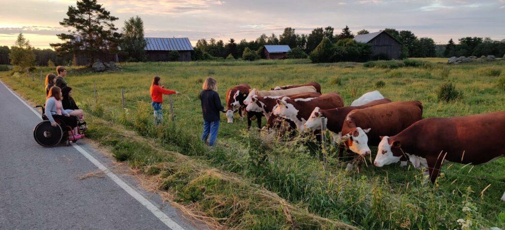 Nuoret katsomassa tien vieressä pellolla olevia lehmiä